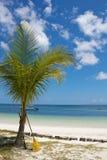 Palmera y rastrillo tropicales Imágenes de archivo libres de regalías