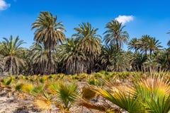 Palmeraies, Palmeral à Elche près d'Alicante en Espagne images libres de droits