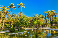 Palmeral av Elche, Spanien Rome Italien, Europa royaltyfria foton