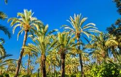 Palmeral d'Elche, Espagne Site d'héritage de l'UNESCO images stock