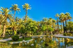 Palmeral di Elche, Spagna Sito di eredità dell'Unesco Fotografie Stock Libere da Diritti