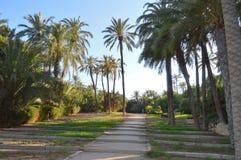 Palmeralpark Alicante Stock Foto's