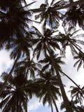 Palmeras Fotografía de archivo