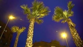 Palmeras altas contra el fondo del cielo nocturno, clima tempestuoso en el centro turístico exótico almacen de video