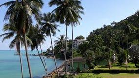 Palmeras altas del coco con agua azul, el cielo azul, y los hoteles cerca del océano Imagen de archivo libre de regalías