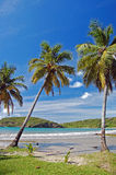 Palmeras altas en la playa de Sagesse del La Foto de archivo