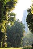 Palmeras bajo sol en ciudad Imagenes de archivo