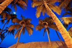 Palmeras bajo un cielo nocturno azul Imágenes de archivo libres de regalías