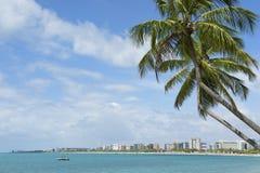 Palmeras brasileñas Maceio Nordeste el Brasil de la playa Foto de archivo