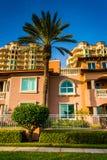 Palmeras, casas y torres de la propiedad horizontal en St Petersburg, la Florida Fotos de archivo libres de regalías