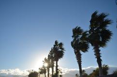 Palmeras cerca de la playa con el sol detrás Fotos de archivo libres de regalías