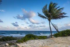 Palmeras cerca de una playa Imagenes de archivo