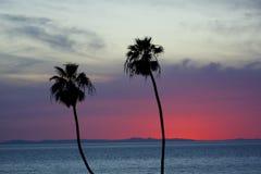 Palmeras con Catalina Island en la puesta del sol Fotos de archivo libres de regalías