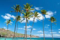 Palmeras con el cielo azul azul con las nubes en fondo Foto de archivo libre de regalías