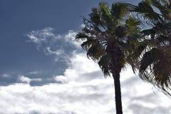 Palmeras con el cielo nublado Fotos de archivo
