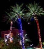 Palmeras con las luces decorativas: La Navidad en Arizona, los E.E.U.U. imagen de archivo