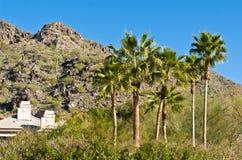 Palmeras de Arizona Fotos de archivo libres de regalías