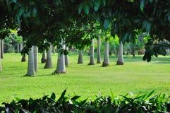 Palmeras con primero plano verde de la hoja Foto de archivo