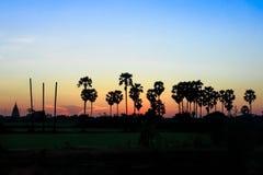 Palmeras con puesta del sol Imagenes de archivo