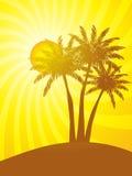 Palmeras con puesta del sol tropical Fotografía de archivo libre de regalías