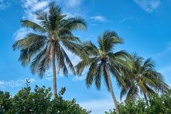Palmeras con un cielo azul en una playa en Nha Trang, Vietnam Fotografía de archivo