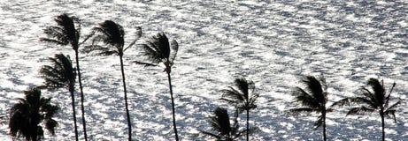 Palmeras contra backgrond del mar imagenes de archivo