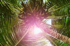 Palmeras contra el cielo azul, palmeras en la costa tropical, vintage entonado y estilizado, árbol de coco, árbol del verano, ret foto de archivo libre de regalías