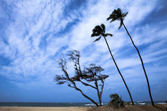 Palmeras contra el cielo tempestuoso hermoso Foto de archivo
