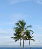 Palmeras contra un cielo azul Imagen de archivo libre de regalías