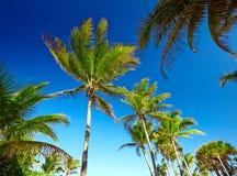 Palmeras contra un cielo azul Foto de archivo libre de regalías
