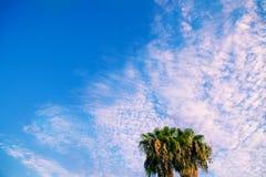 Palmeras contra un cielo azul Fotos de archivo