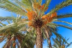 Palmeras contra un cielo azul en Miami Beach Imagen de archivo