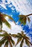 Palmeras contra un cielo azul en tropical Imagen de archivo