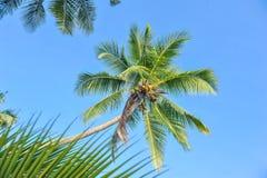Palmeras contra un cielo azul Palmeras hermosas contra el cielo soleado azul Paisaje tropical Fotos de archivo libres de regalías