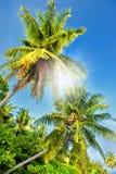 Palmeras contra un cielo azul Palmeras hermosas contra el cielo soleado azul Palmeras en fondo del cielo Fotografía de archivo