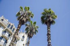 Palmeras contra un cielo azul y un edificio con las nubes finas en Barcelona, España Día soleado azul hermoso Palma del árbol Imagenes de archivo