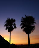Palmeras contra una puesta del sol Fotos de archivo