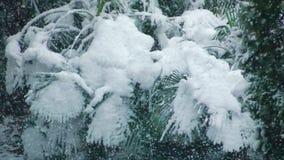 Palmeras cubiertas con nieve almacen de video