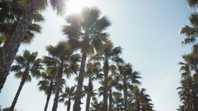 Palmeras de California en calle viaje, verano, vacaciones y concepto tropical de la playa almacen de video