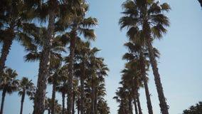 Palmeras de California en calle viaje, verano, vacaciones y concepto tropical de la playa metrajes