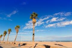 Palmeras de la playa de Valencia en Patacona foto de archivo libre de regalías