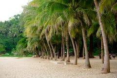 Palmeras de la playa en la arena fotos de archivo