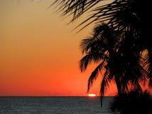 Palmeras de la playa en la puesta del sol Fotos de archivo