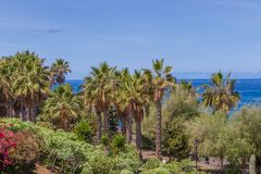 Palmeras de la selva en el cielo azul Fotografía de archivo