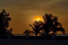 Palmeras de la silueta en la puesta del sol crepuscular Foto de archivo libre de regalías