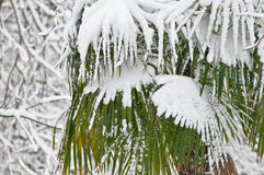 Palmeras debajo de las nevadas fuertes Fotografía de archivo libre de regalías