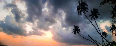 Palmeras debajo de las nubes en la puesta del sol Foto de archivo libre de regalías