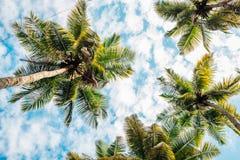 Palmeras debajo del cielo azul en Goa, la India foto de archivo libre de regalías