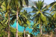 Palmeras del coco Foto de archivo libre de regalías