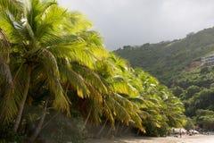 Palmeras del coco Imágenes de archivo libres de regalías